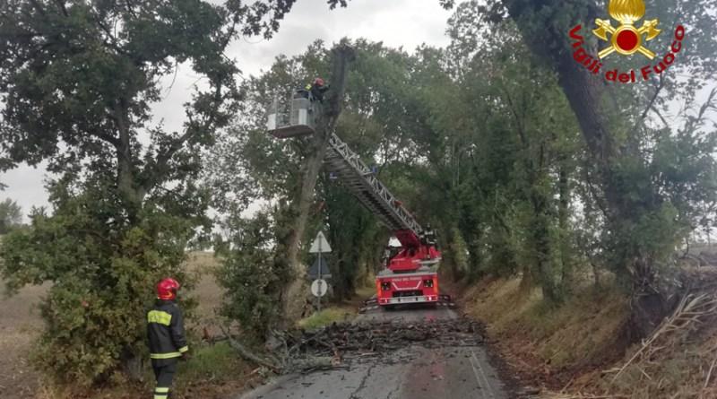 Allagamenti ed alberi caduti, tanti interventi dei vigili del fuoco