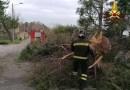 Alberi e rami spezzati dal forte vento: molti interventi dei Vigili del fuoco