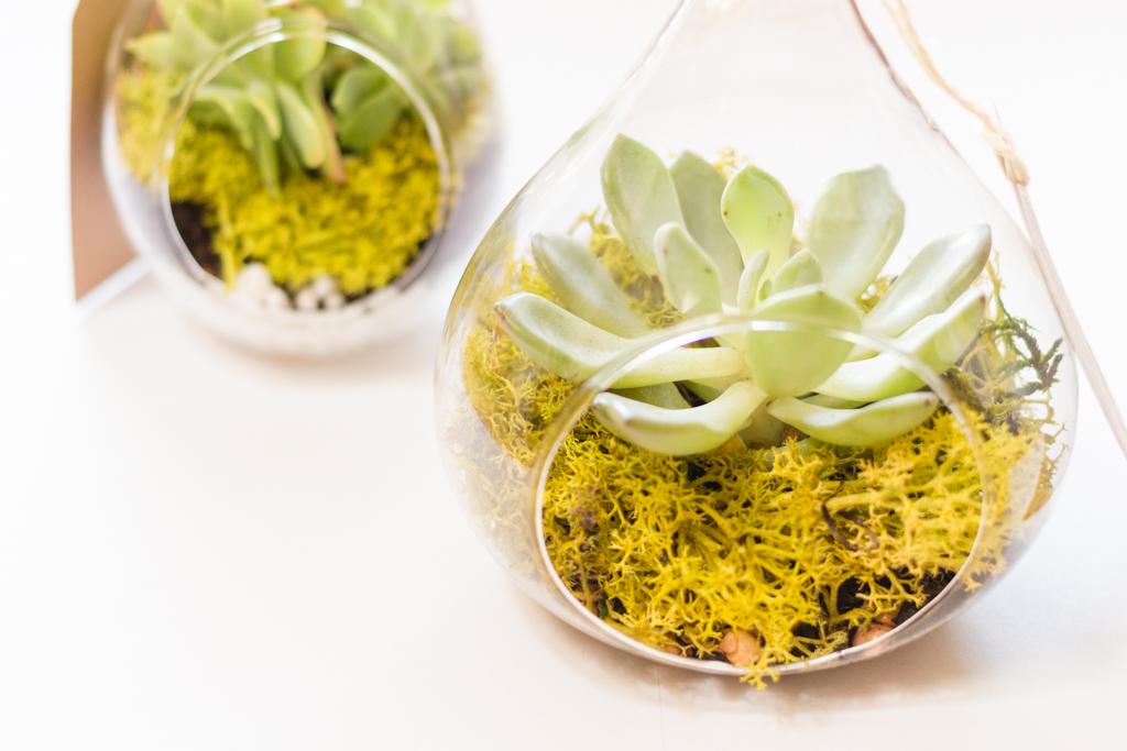 DIY - Fabriquer un terrarium végétal pour un cadeau invité original - Blog mariage La Mariee Sous Les Etoiles