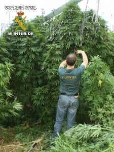 Policia jugando a me quiere o no me quiere con una planta de Marihuana