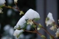 10_neige_02_18