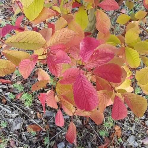 Feuille rouge d'automne