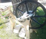 06.21.18 - Flatiron Spinning Wheel