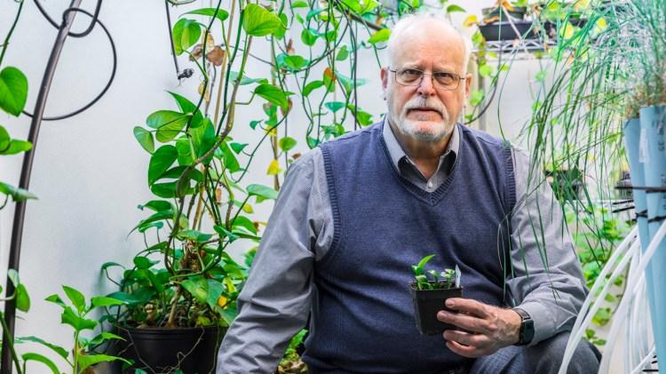 Stuart Strand el investigador que hizo posible el desarrollo de la planta (Foto: Universidad de Washington)