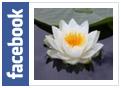 MM - Facebook