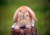 mente-principi-coniglietto-velluto.jpg