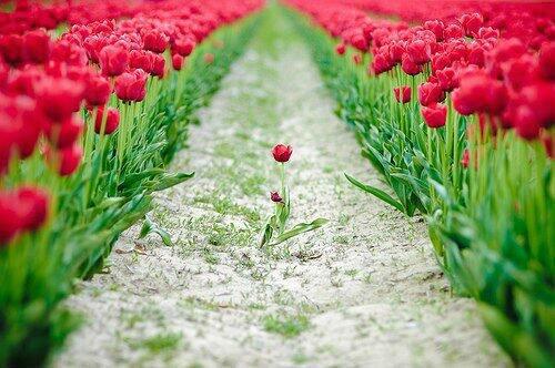 Qualunque fiore tu sia sboccerai: per trasformare la tua vita