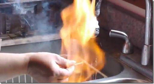 grifo fuego