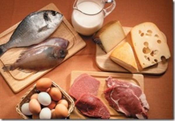 protéines animales