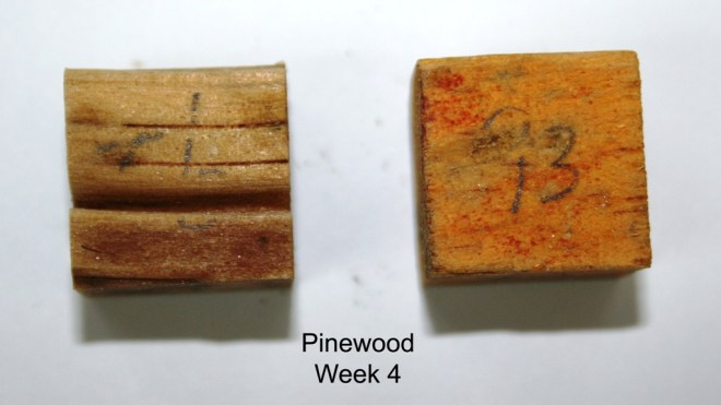 Pinewood_week 4 (resize)