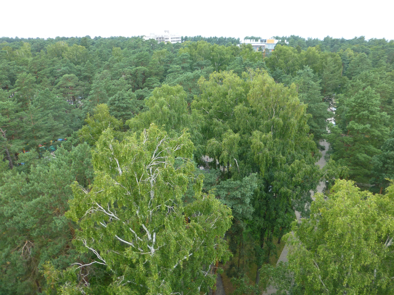 vistas del parque desde la torre