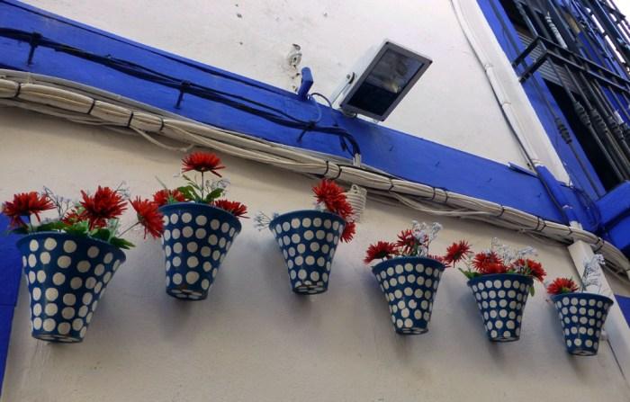 flores cordobesas