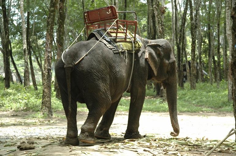 elefantes-turismo-responsable