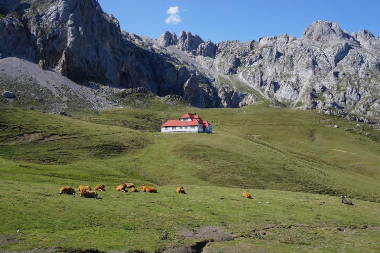 chalet real y vacas en primer plano