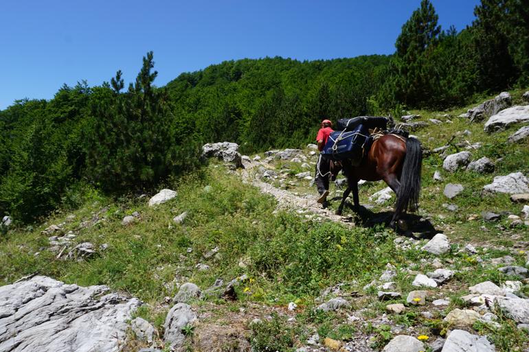 Caballos cargando equipajes