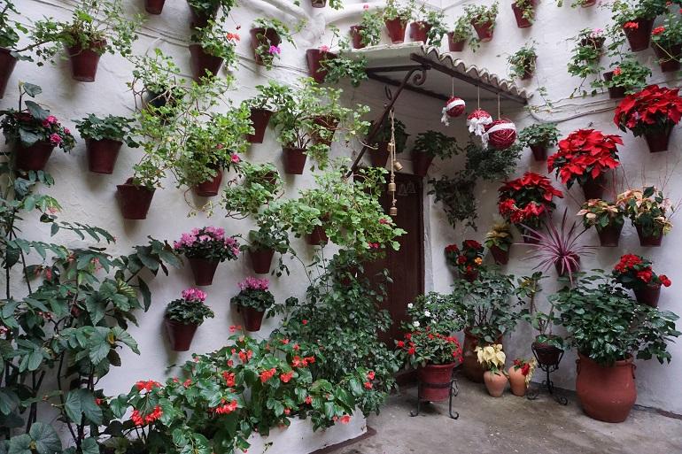 Pared encalada repleta de macetas con plantas y flores