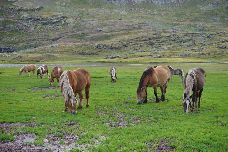 Caballos pastando en los alrededores de los ibones de Anayet