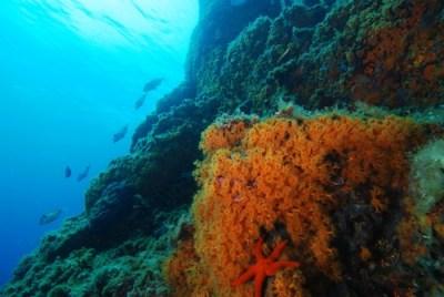 Scoglio Fortuna Lampedusa Immersioni
