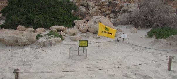 La Caretta Caretta torna a deporre alla Spiaggia dei Conigli