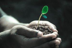 hands, macro, plant-1838658.jpg