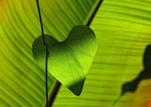 leaf, heart, green-547400.jpg