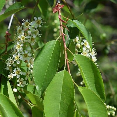 Best Spring Flowering Trees For The Denver Foothills