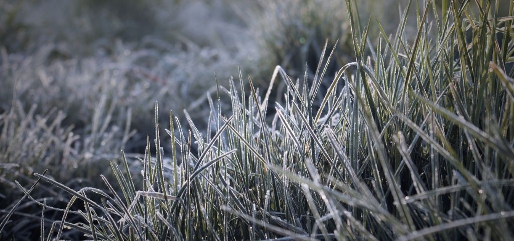 Morning frost covers blades of grass in the spring in Colorado.