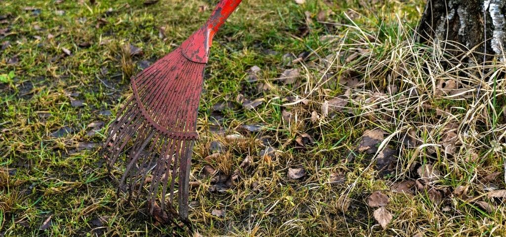 A red rake leans against a tree during spring clean up in Colorado.