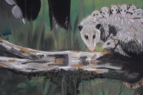 El mural que expone la fauna silvestre del Huila 7 27 mayo, 2020