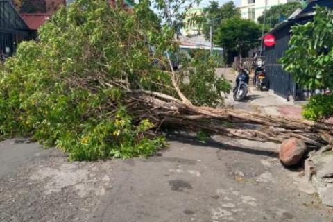 Masiva caída de árboles por fuertes vientos en Neiva 2 27 mayo, 2020