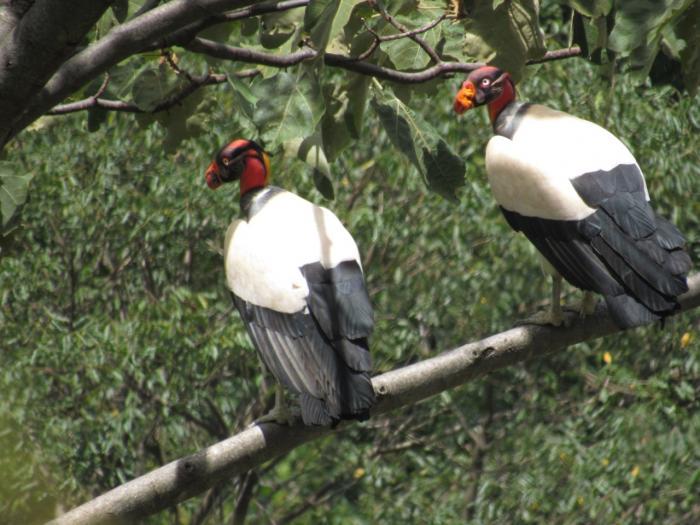 En el Día de la Biodiversidad, disfrute este recorrido virtual por la ecoreserva La Tribuna 8 27 mayo, 2020