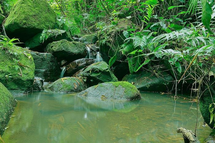 En el Día de la Biodiversidad, disfrute este recorrido virtual por la ecoreserva La Tribuna 5 27 mayo, 2020