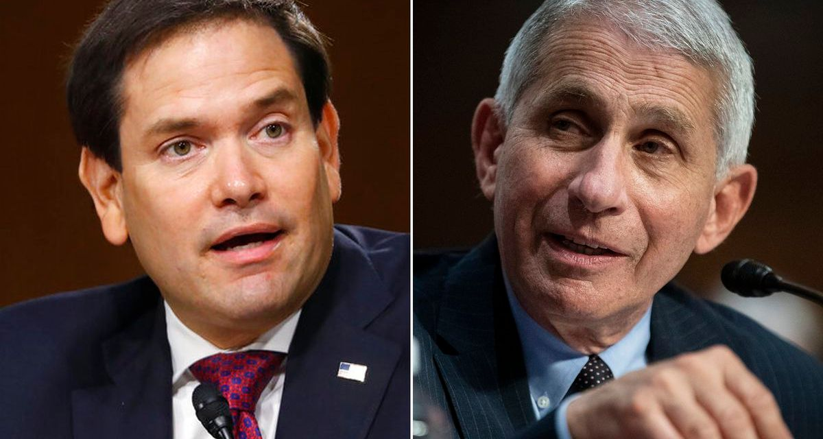 Marco Rubio gets his head handed to him for accusing Anthony Fauci of lying about COVID