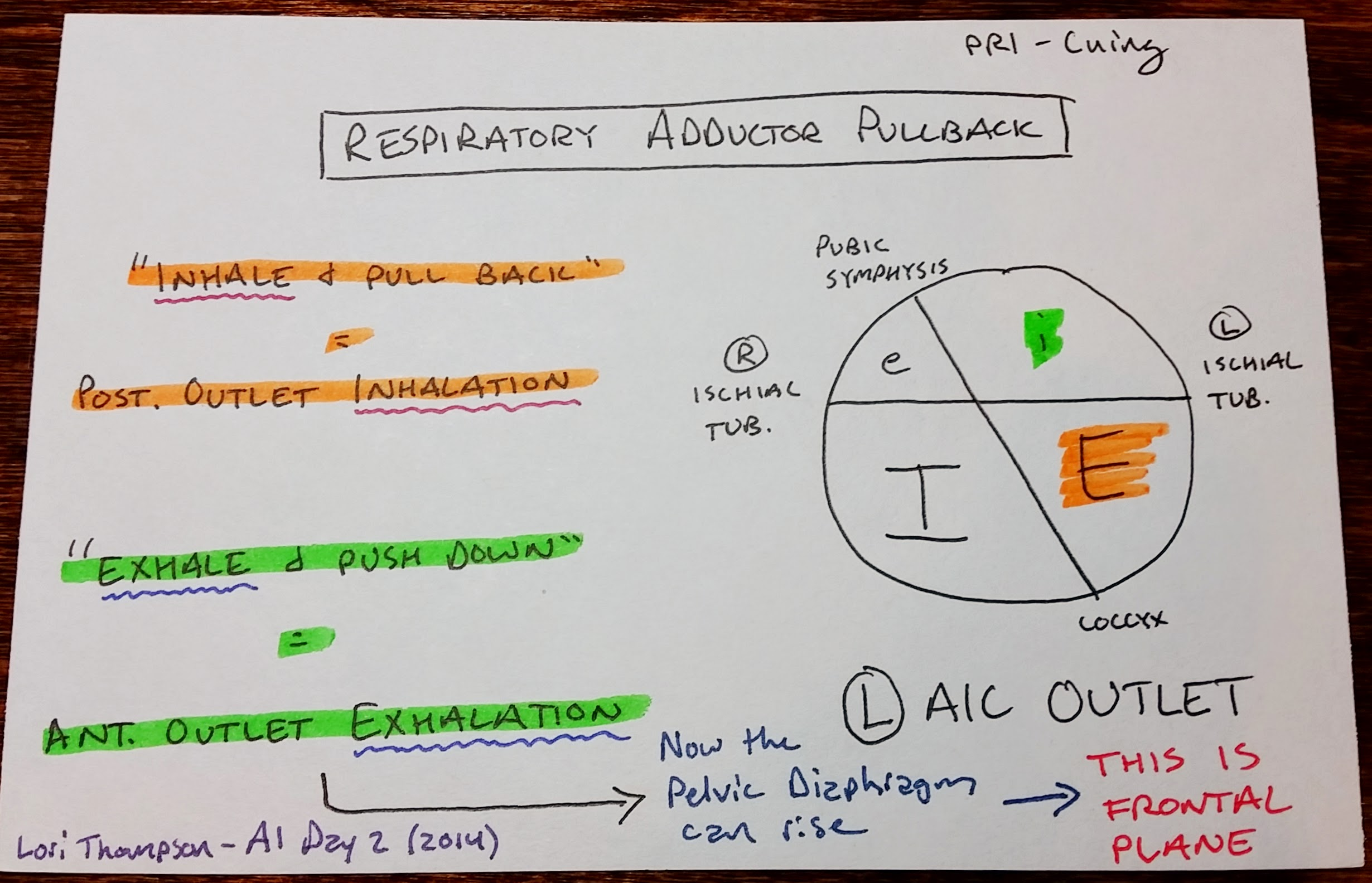 Course Recap Pri Advanced Integration Day 2 Inhalation Exhalation Diagram Of Diaphragm The Inhaled Left Anterior Inlet In A State Greater This Allows Pelvic Septum To Rise On And Helps Us Achieve