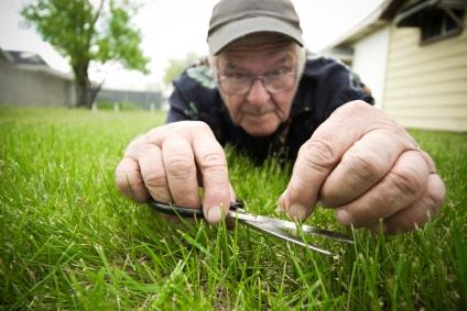 cutting-grass-with-scissors-2