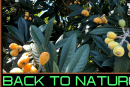 GOING BACK TO NATURE IS THE ONLY WAY FOR BLACK PEOPLE TO GET OUT THE MATRIX!