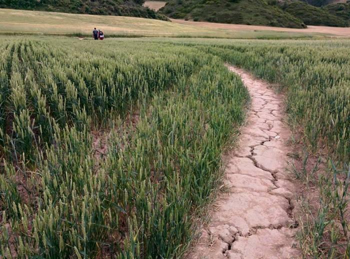 Torrt-på-marken-El-Camino-de-Santiago