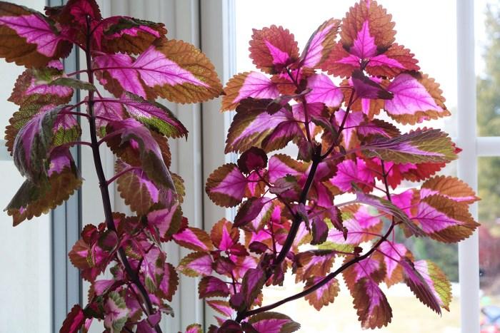 palettblad blomma