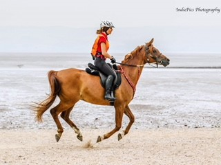 rossi horse