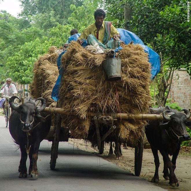 Transport in Bangladesh (©photocoen)