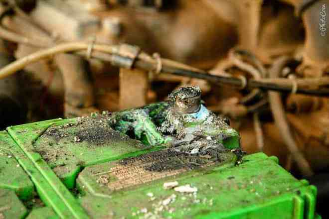 A melted battery due to a short in the winch cable [©photocoen]