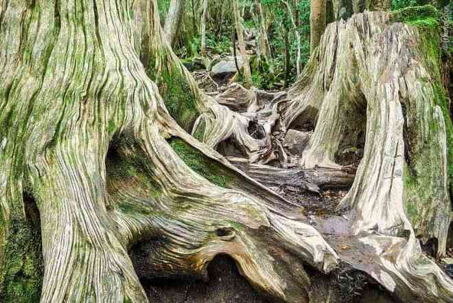 Fabulous nature on Yakushima (©photocoen)