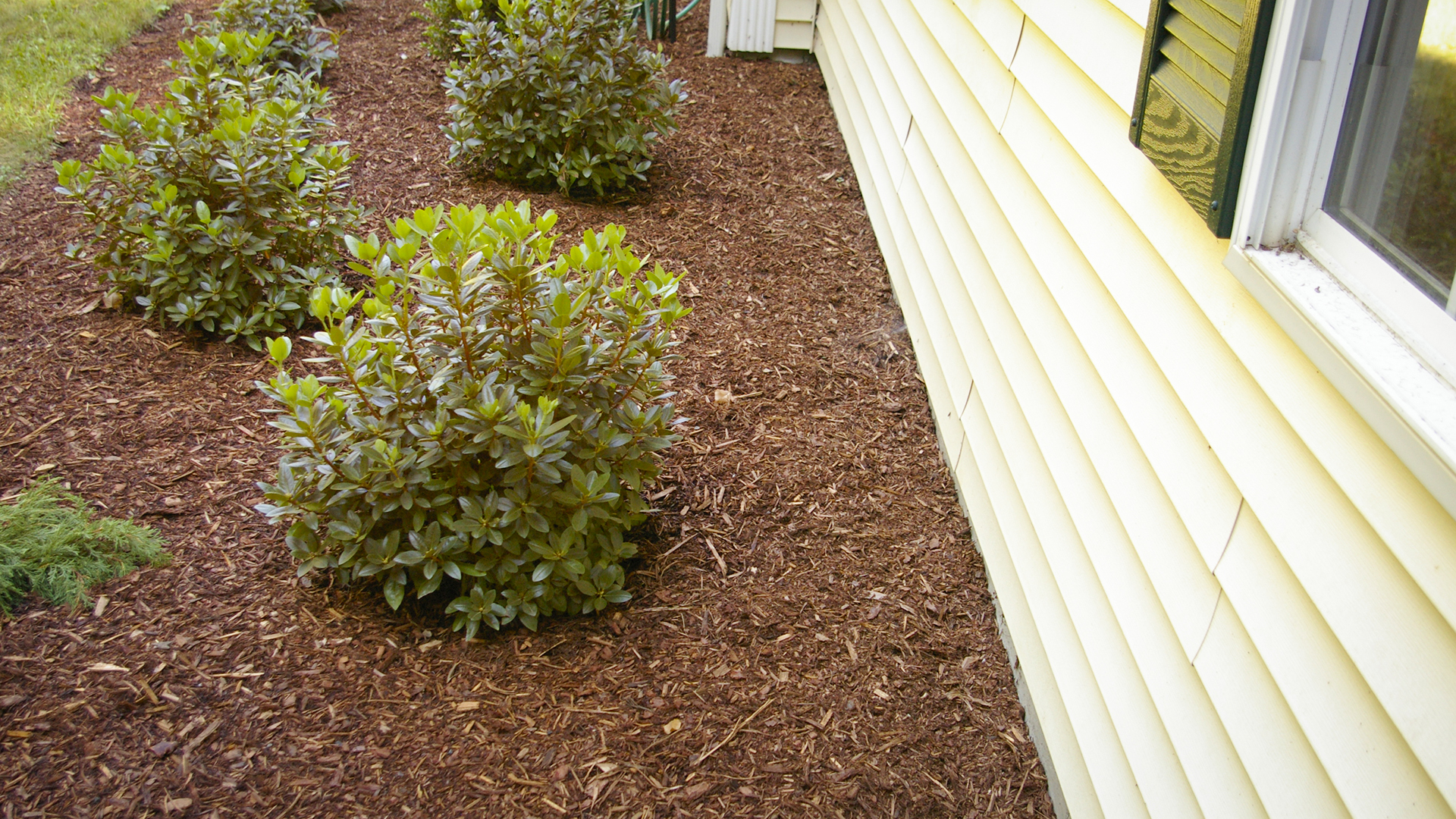 How Close To House To Plant Shrubs Land Designs Unlimited Llc