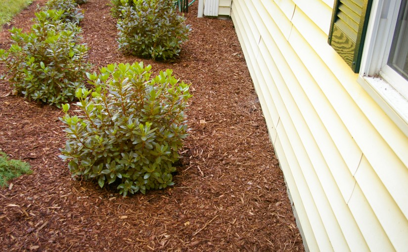 How Close to House to Plant Shrubs
