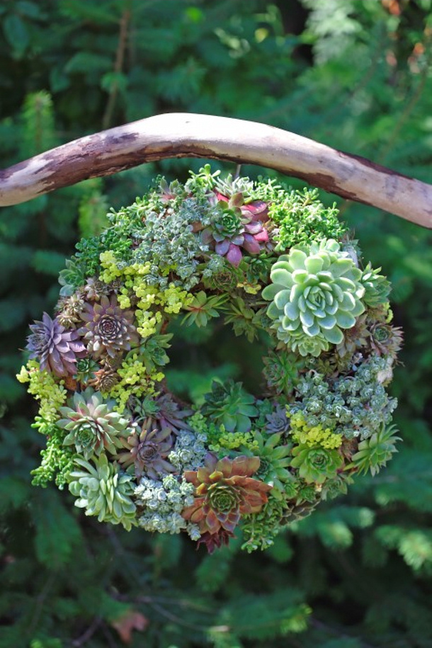 Garden therapy Semper-viva-Wreath-how-to-make-a-succulent-wreath (1)