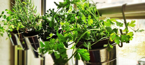Window Herb Garden IKEA hack via jill m