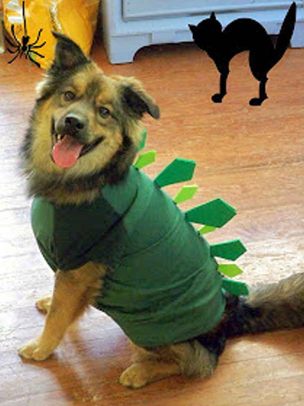 Dog Costume Stegosaurus