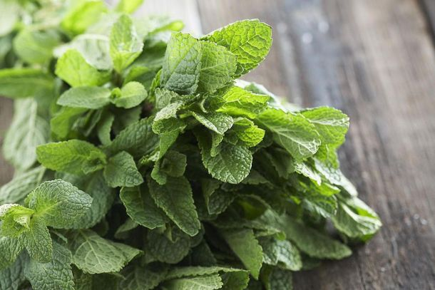How to Grow Your Own Mint Indoors | Kitchn