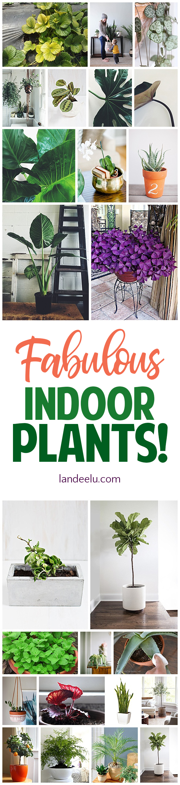 Great suggestions for the best indoor plants for the home! #plantlady #indoorplants #bestplants #plants #greenthumb