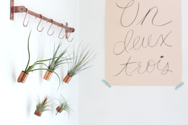 Hanging Air Plants | Gathered Cheer